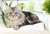 CAT 01 JE0106 01