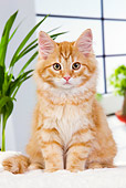CAT 01 JE0108 01