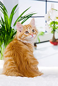 CAT 01 JE0110 01