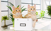 CAT 01 JE0112 01