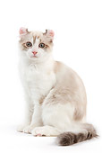 CAT 01 JE0118 01