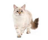 CAT 01 JE0119 01