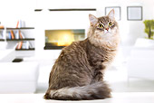 CAT 01 JE0124 01