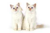 CAT 01 JE0133 01