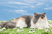 CAT 01 JE0137 01