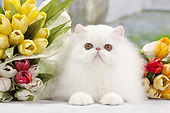 CAT 01 JE0138 01