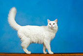 CAT 01 KH0003 01