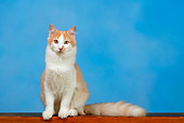 CAT 01 KH0004 01