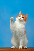 CAT 01 KH0006 01