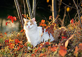 CAT 01 KH0041 01