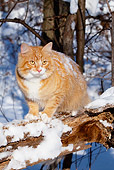 CAT 01 LS0007 01