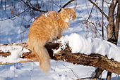 CAT 01 LS0008 01