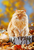 CAT 01 PE0001 01