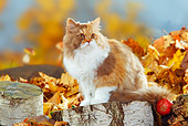 CAT 01 PE0002 01