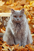 CAT 01 PE0005 01