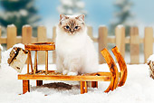CAT 01 PE0006 01