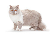 CAT 01 PE0015 01