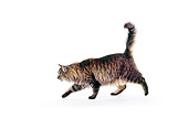 CAT 01 RK0099 07