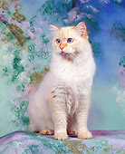 CAT 01 RK0113 04