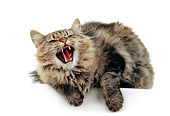 CAT 01 RK0163 03