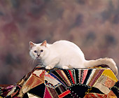 CAT 01 RK0249 05