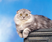 CAT 01 RK0274 03