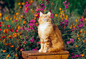 CAT 01 RK0288 07
