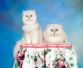 CAT 01 RK0295 02