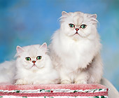 CAT 01 RK0295 09