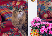 CAT 01 RK0374 02