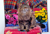 CAT 01 RK0375 03
