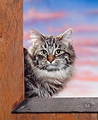 CAT 01 RK0378 02