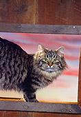 CAT 01 RK0381 02