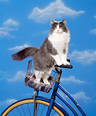 CAT 01 RK0386 03