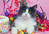 CAT 01 RK0403 09
