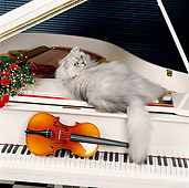 CAT 01 RK0443 11