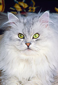 CAT 01 RK0450 10
