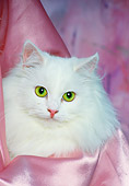 CAT 01 RK0461 21