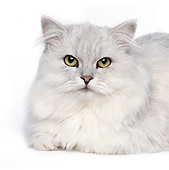CAT 01 RK0481 01