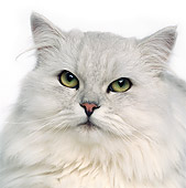 CAT 01 RK0481 09