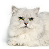 CAT 01 RK0481 10