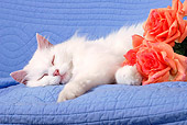 CAT 01 SJ0002 01