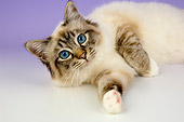 CAT 01 AL0018 01