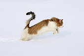 CAT 01 KH0007 01