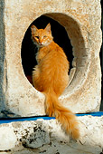 CAT 01 KH0013 01