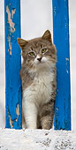 CAT 01 KH0022 01