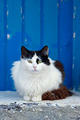 CAT 01 KH0024 01