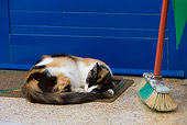 CAT 01 KH0025 01