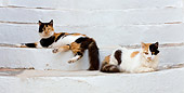 CAT 01 KH0027 01