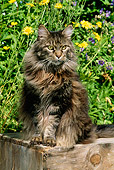 CAT 01 LS0001 01